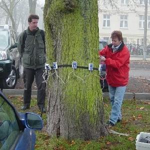 Johanna Wirth - Baumgutachten - Bruchsicherheit von Bäumen - Tomografie einer Roßkastanie